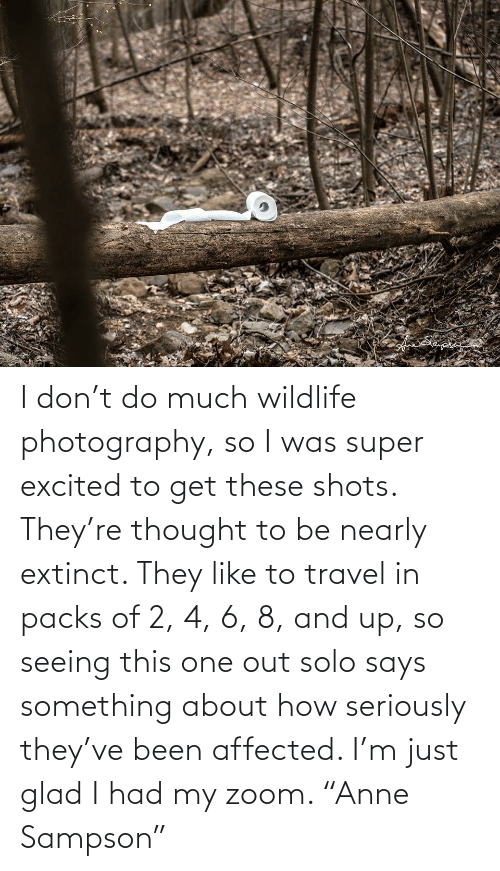 """Zoom, Photography, and Travel: I don't do much wildlife photography, so I was super excited to get these shots. They're thought to be nearly extinct. They like to travel in packs of 2, 4, 6, 8, and up, so seeing this one out solo says something about how seriously they've been affected. I'm just glad I had my zoom. """"Anne Sampson"""""""