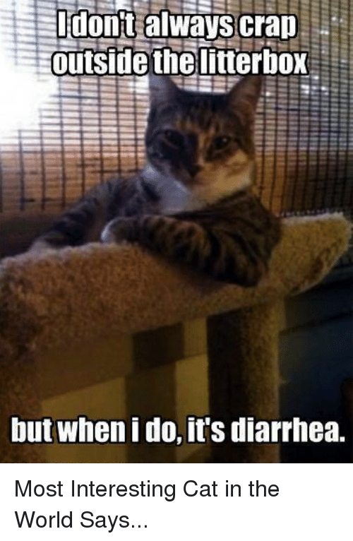 Most Interesting Cat In The World