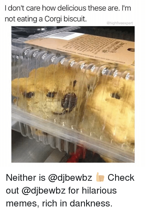 Corgi, Memes, and Hilarious: I don't care how delicious these are. I'm  not eating a Corgi biscuit.  @highfiveexpert Neither is @djbewbz 👍🏼 Check out @djbewbz for hilarious memes, rich in dankness.