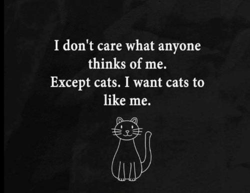 Cats, Memes, and 🤖: I don't care what anyone  thinks of me.  Except cats. I want cats to  like me.