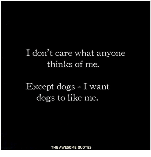 I Dont Care What Anyone Thinks Of Me Except Dogs I Want Dogs To