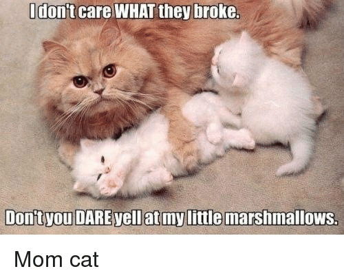 LOLcats, Mom, and Cat: I don't care WHAT they broke.  Donityou DARE yell at my little marshmallows Mom cat