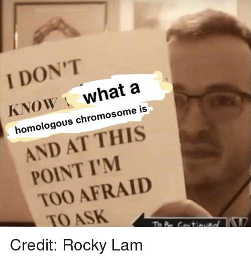 Memes, Rocky, and 🤖: I DON'T  KNOW what a  homologous chromosome is  AND AT THIS  POINT I'M  TOO AFRAID  TO ASK Credit: Rocky Lam