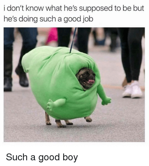Memes, Good, and Boy: i don't know what he's supposed to be but  he's doing such a good job Such a good boy