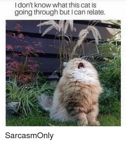 Funny, Memes, and Cat: I don't know what this cat is  going through but I can relate. SarcasmOnly