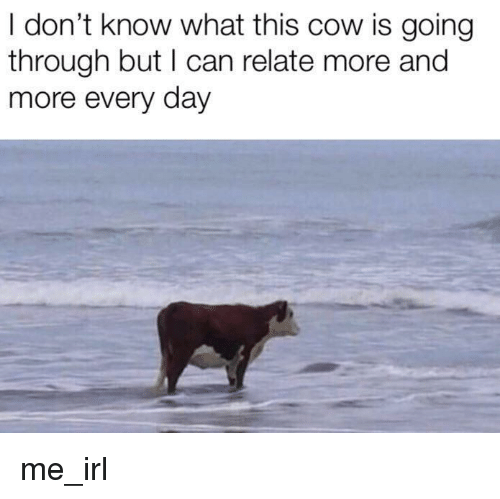 Irl, Me IRL, and Cow: I don't know what this cow is going  through but I can relate more and  more every day me_irl