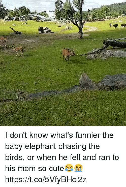 Cute, Birds, and Elephant: I don't know what's funnier the baby elephant chasing the birds, or when he fell and ran to his mom so cute😂😭 https://t.co/5VfyBHci2z