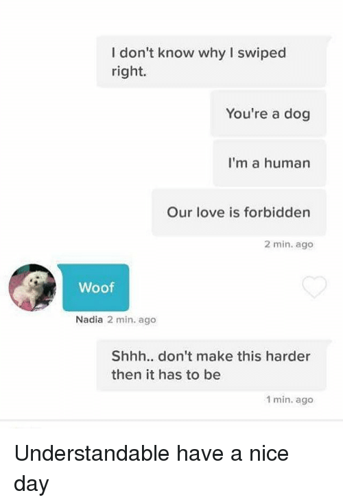 Understandable Have A Nice Day Dog Bad Boys