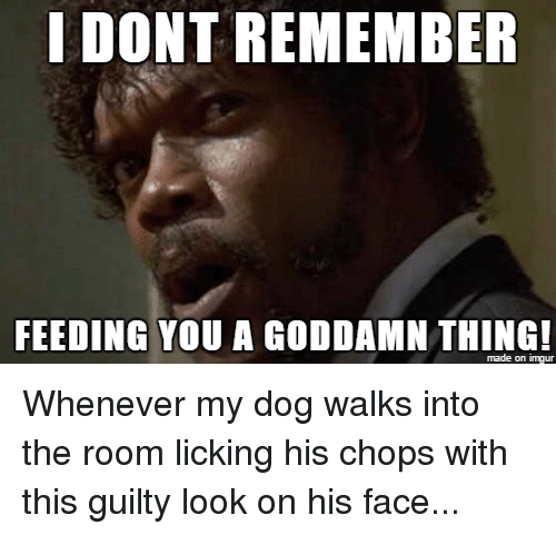 Dogs, Advice Animals, and Dog: I DONT REMEMBER  FEEDING YOU A GODDAMN THING!  made on inngur Whenever my dog walks into the room licking his chops with this guilty look on his face...