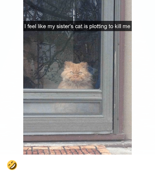Memes, 🤖, and Cat: I feel like my sister's cat is plotting to kill me 🤣