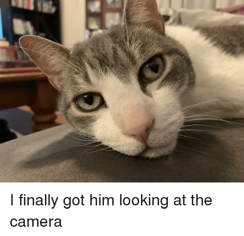 Camera, Got, and Looking