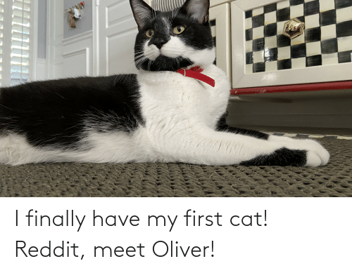 Reddit, Cat, and First: I finally have my first cat! Reddit, meet Oliver!
