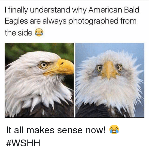 i finally understand why american bald eagles are always photographed 12901851 i finally understand why american bald eagles are always