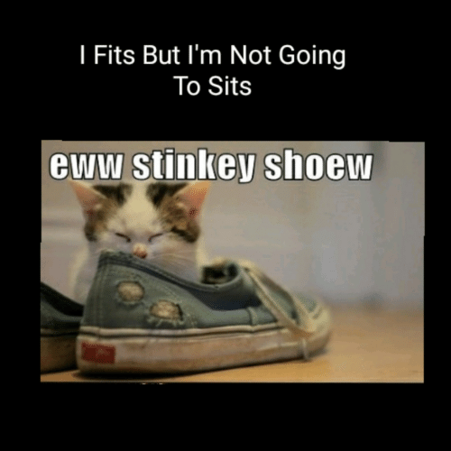 Eww, But, and Not: I Fits But I'm Not Going  To Sits  eww stinkey shoew