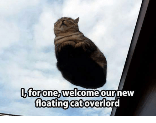 i for one wel e our new floating cat overlord cats