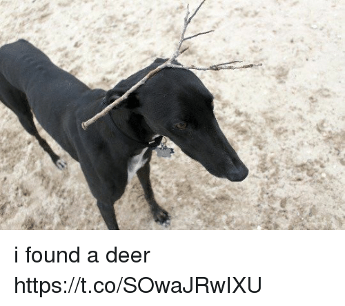 Deer, Girl Memes, and Found: i found a deer https://t.co/SOwaJRwIXU