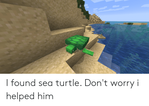 Turtle, Him, and Sea Turtle: I found sea turtle. Don't worry i helped him