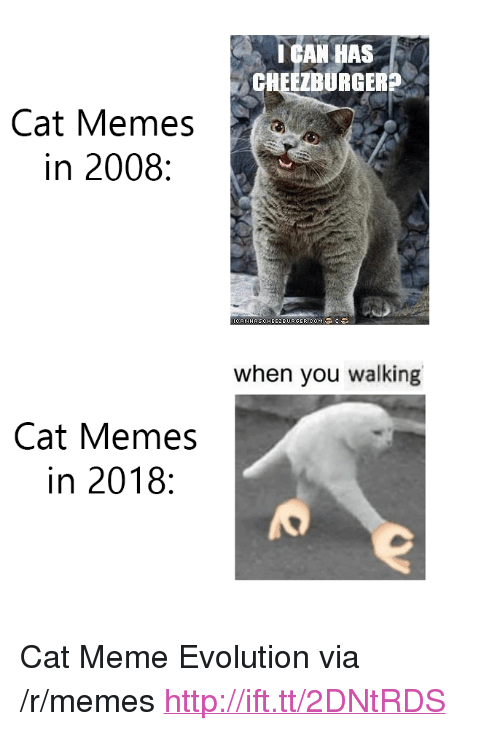 """Meme, Memes, and Evolution: I GAN HAS  CHEEZBURGERS  Cat Memes  in 2008:  CANHASCHEE2BURGER.COM  when you walking  Cat Memes  in 2018: <p>Cat Meme Evolution via /r/memes <a href=""""http://ift.tt/2DNtRDS"""">http://ift.tt/2DNtRDS</a></p>"""