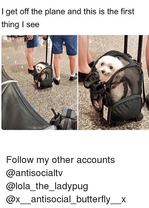 Memes, Butterfly, and Antisocial: I get off the plane and this is the first  thing I see Follow my other accounts @antisocialtv @lola_the_ladypug @x__antisocial_butterfly__x