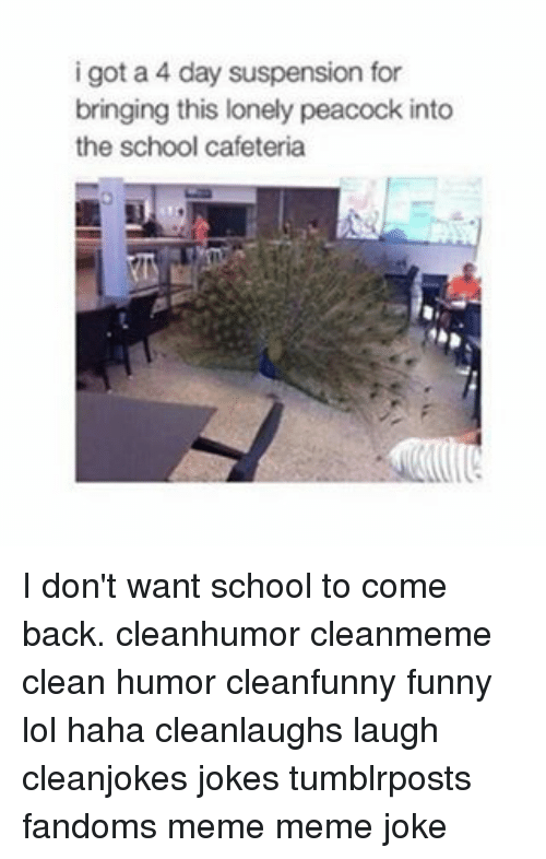 Memes, Peacock, and 🤖: i got a 4 day suspension for  bringing this lonely peacock into  the school cafeteria I don't want school to come back. cleanhumor cleanmeme clean humor cleanfunny funny lol haha cleanlaughs laugh cleanjokes jokes tumblrposts fandoms meme meme joke