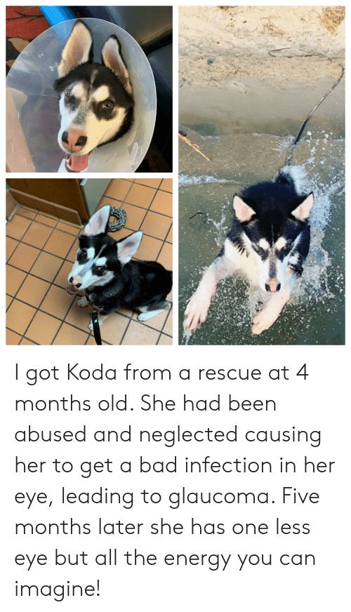I Got Koda From a Rescue at 4 Months Old She Had Been Abused