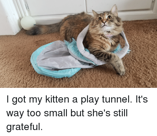 Time, All The, and All the Time: I got my kitten a play tunnel. It's way too small but she's still grateful.