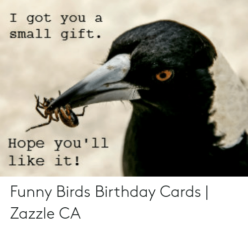 I Got You Small Gift Hope You L1 Like It Funny Birds Birthday Cards Zazzle Ca Birthday Meme On Me Me