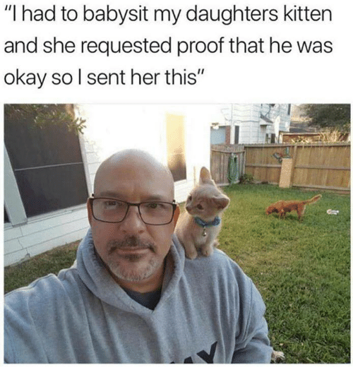 """Memes, Okay, and 🤖: """"I had to babysit my daughters kitten  and she requested proof that he was  okay sol sent her this"""""""