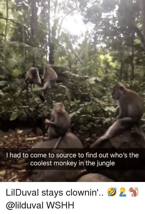 Memes, Wshh, and Monkey: I had to come to source to find out who's the  coolest monkey in the jungle LilDuval stays clownin'.. 🤣🤦‍♂️🐒 @lilduval WSHH