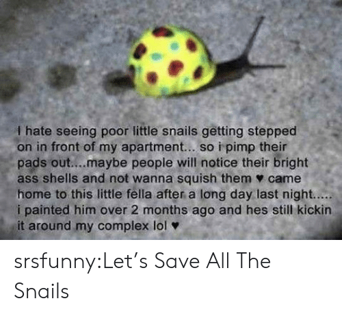 Ass, Complex, and Lol: I hate seeing poor little snails getting stepped  on in front of my apartment... so i pimp their  pads out....maybe people will notice their bright  ass shells and not wanna squish them ф came  home to this little fella after a long day last night.....  i painted him over 2 months ago and hes still kickin  it around my complex lol srsfunny:Let's Save All The Snails
