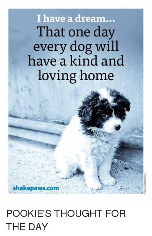 i have a dream that one day every dog will have a kind and loving