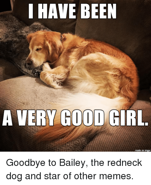 i have been a very good girl made on imgur 30112022 25 best redneck dog memes my daughter memes, aint memes, ons memes