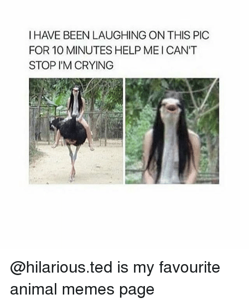 Crying, Memes, and Ted: I HAVE BEEN LAUGHING ON THIS PIC  FOR 10 MINUTES HELP MEICAN'T  STOP I'M CRYING @hilarious.ted is my favourite animal memes page