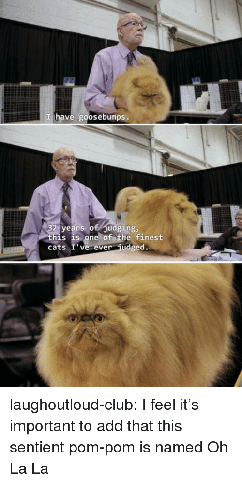 Cats, Club, and Tumblr: I have goosebumps.  32 years of Judging,  his is one of the finest  cats I' ve ever udged. laughoutloud-club:  I feel it's important to add that this sentient pom-pom is named Oh La La