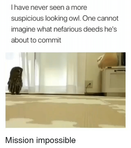 Funny, Never, and Mission Impossible: I have never seen a more  suspicious looking owl. One cannot  imagine what nefarious deeds he's  about to commit Mission impossible