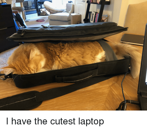 Laptop, Cutest, and The