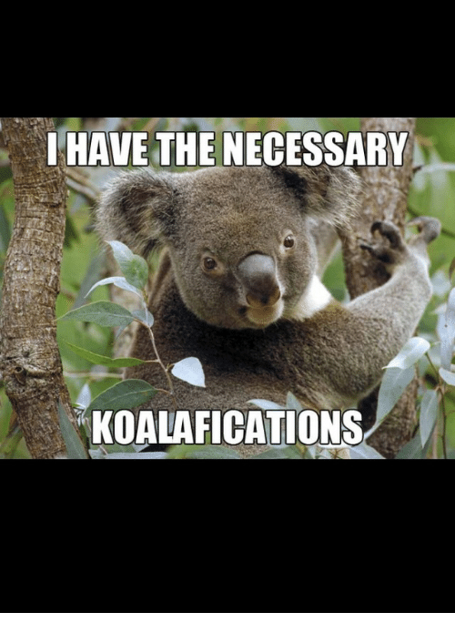Image result for proper koalafications
