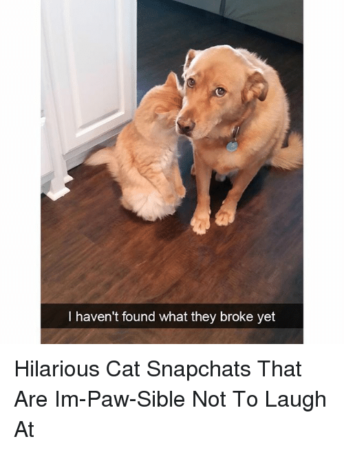 Funny, Hilarious, and Cat: I haven't found what they broke yet Hilarious Cat Snapchats That Are Im-Paw-Sible Not To Laugh At