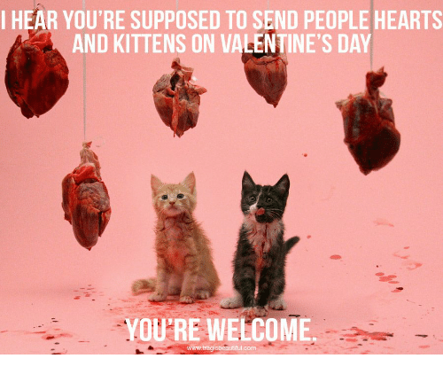 Valentine's Day, Hearts, and Kittens: I HEAR YOU'RE SUPPOSED TO SEND PEOPLE HEARTS  AND KITTENS ON VALENTINE'S DAY  YOU'RE WELCOME  com