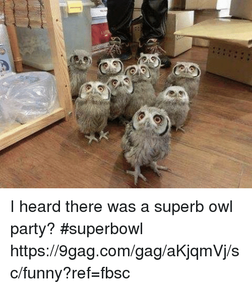 9gag, Dank, and Funny: I heard there was a superb owl party? #superbowl https://9gag.com/gag/aKjqmVj/sc/funny?ref=fbsc