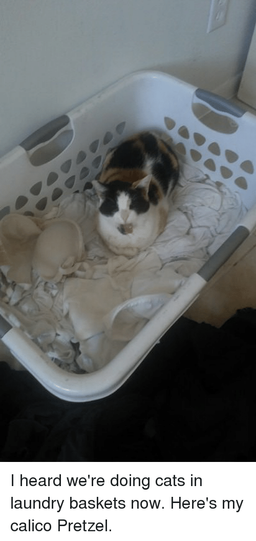 i heard we re doing cats in laundry baskets now here s my calico