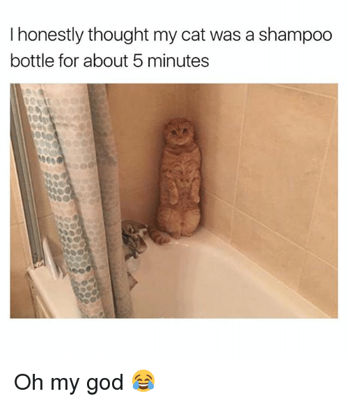 God, Oh My God, and Girl: I honestly thought my cat was a shampoo  bottle for about 5 minutes Oh my god 😂