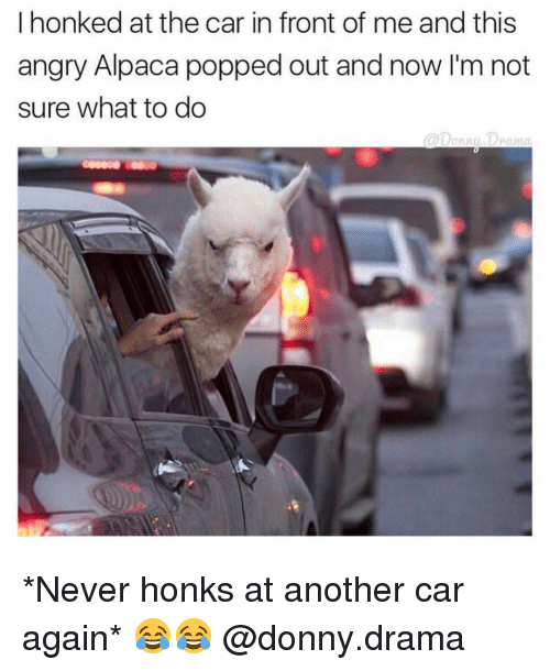 Memes, Alpaca, and 🤖: I honked at the car in front of me and this  angry Alpaca popped out and now I'm not  sure what to do *Never honks at another car again* 😂😂 @donny.drama