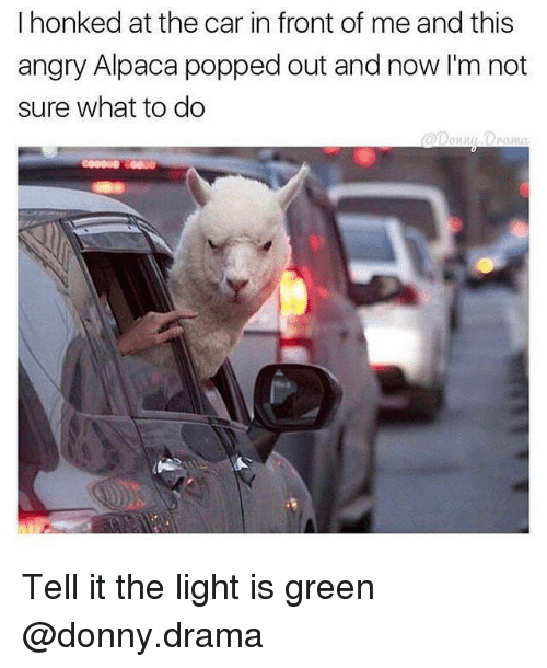 Girl Memes, Angry, and Alpaca: I honked at the car in front of me and this  angry Alpaca popped out and now I'm not  sure what to do Tell it the light is green @donny.drama