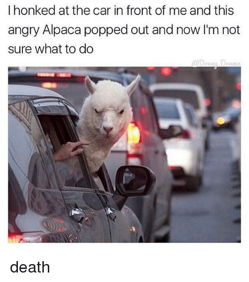 Death, Angry, and Alpaca: I honked at the car in front of me and this  angry Alpaca popped out and now I'm not  sure what to do death