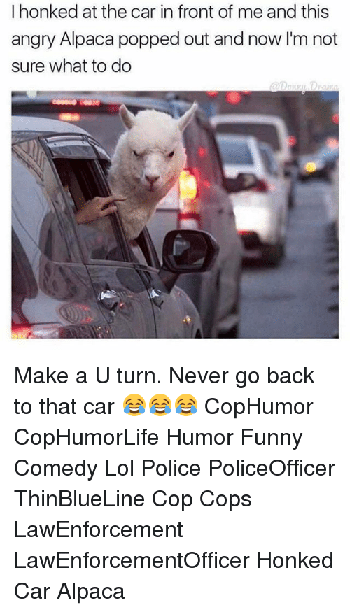 Funny, Lol, and Memes: I honked at the car in front of me and this  angry Alpaca popped out and now I'm not  sure what to do Make a U turn. Never go back to that car 😂😂😂 CopHumor CopHumorLife Humor Funny Comedy Lol Police PoliceOfficer ThinBlueLine Cop Cops LawEnforcement LawEnforcementOfficer Honked Car Alpaca