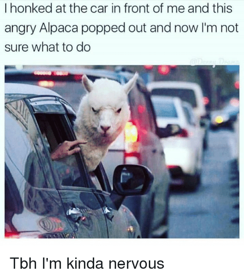 Dank, Tbh, and Angry: I honked at the car in front of me and this  angry Alpaca popped out and now I'm not  sure what to do Tbh I'm kinda nervous