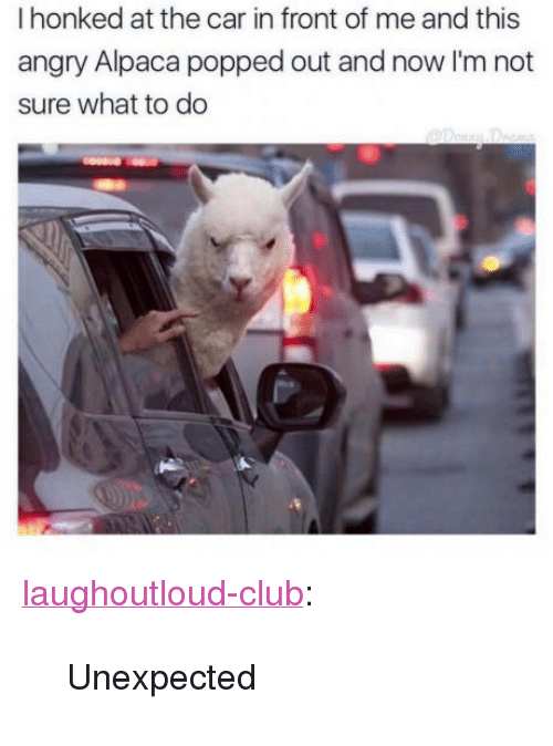 """Club, Tumblr, and Blog: I honked at the car in front of me and this  angry Alpaca popped out and now I'm not  sure what to do <p><a href=""""http://laughoutloud-club.tumblr.com/post/157587510165/unexpected"""" class=""""tumblr_blog"""">laughoutloud-club</a>:</p>  <blockquote><p>Unexpected</p></blockquote>"""