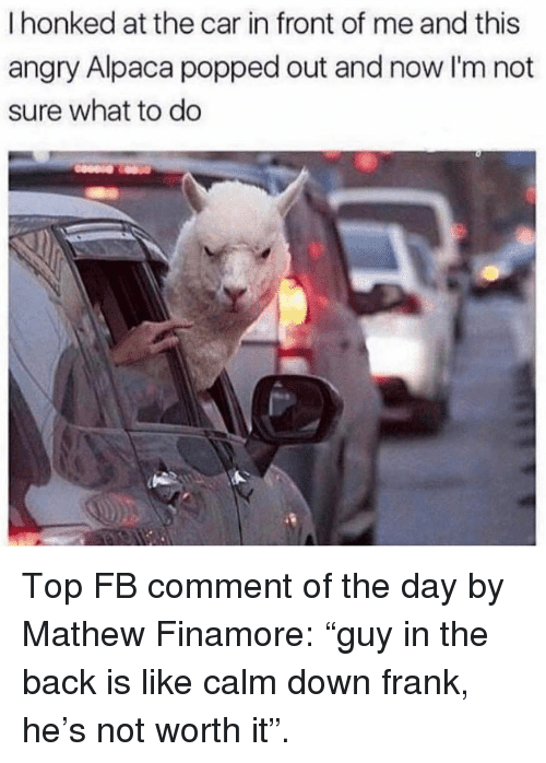 "Memes, Angry, and Alpaca: I honked at the car in front of me and this  angry Alpaca popped out and now I'm not  sure what to do Top FB comment of the day by Mathew Finamore: ""guy in the back is like calm down frank, he's not worth it""."