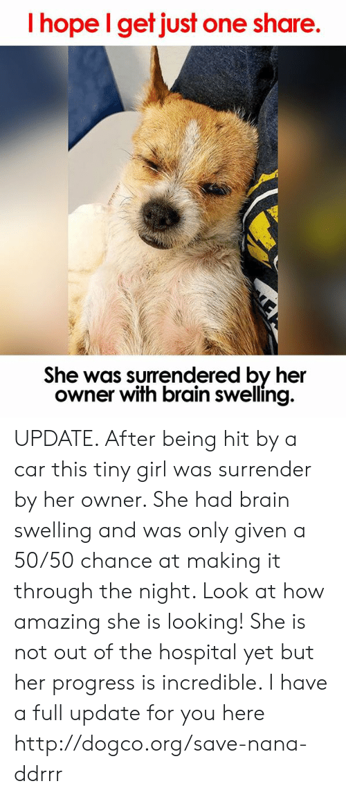 Memes, Brain, and Girl: I hope I get just one share.  She was surrendered by her  owner with brain swelling. UPDATE. After being hit by a car this tiny girl was surrender by her owner. She had brain swelling and was only given a 50/50 chance at making it through the night. Look at how amazing she is looking! She is not out of the hospital yet but her progress is incredible. I have a full update for you here http://dogco.org/save-nana-ddrrr